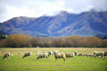 ニュージーランド ホームステイ(クライストチャーチ)